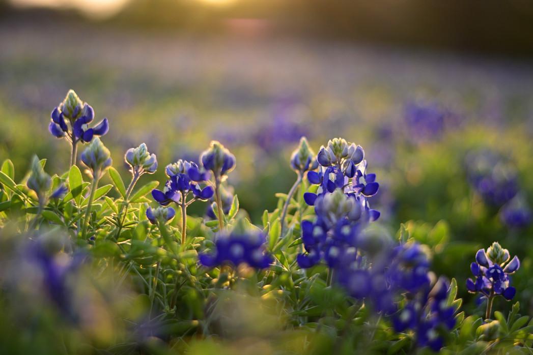λουλούδια κήπος όλο το χρόνο