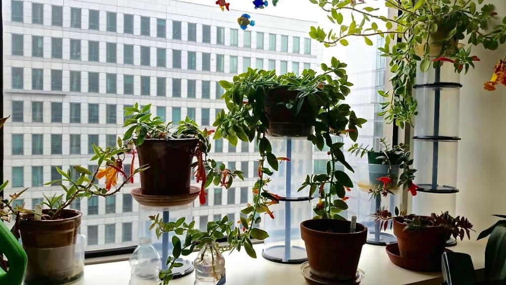 φυτά σε παράθυρο
