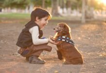 Αγοράκι παίζει με σκύλο