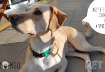 σκύλος στο μπαλκόνι