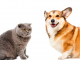 σκύλος, γάτα και ψυχολογικές διαταραχές