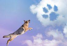σκύλος σύννεφα